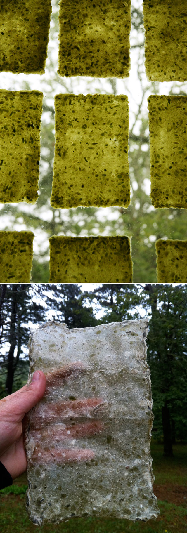 handmade paper from plants