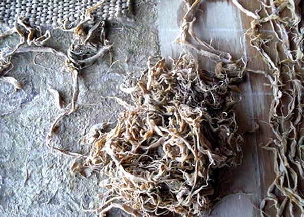Amate bark fiber for paper