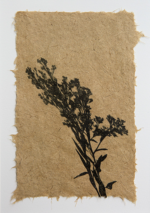 hand papermaking from plants, photographs
